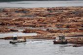 Log Booms, Vancouver Island, British Columbia