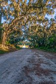 Spanish Moss Hanging From Tree Branches Above The Laurel Hill Wildlife Drive. Savannah National Wild poster