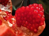 Ripe Red Granet Or Garnet. Fruits Of Red Ripe Pomegranate Isolate On The White Background. Vegetaria poster