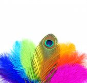 Colored feathers on white background. Carnival.  Peacock feather                       poster