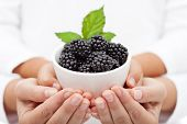 Adult and child hands holding blackberries in a bowl - shallow depth