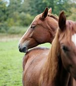 picture of brown horse  - A photography of a brown horses standing - JPG