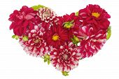 stock photo of broken heart flower  - Bloody floral isolated heart concept from red summer dahlias flowers with buds - JPG
