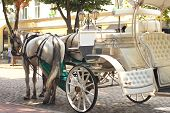 image of carriage horse  - Horses drawn carriage on summer city street - JPG