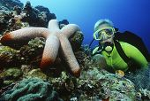 stock photo of echinoderms  - Underwater shoot of a female scuba diver watching large starfish - JPG