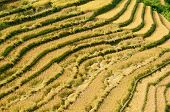 Terraced Fields, Mu Cang Chai District, Yen Bai Province, Vietnam
