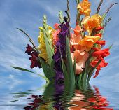 Sinking Bunch Of Gladioli Flowers