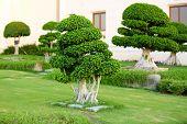 pic of bonsai tree  - Beautiful tree in park - JPG