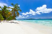 stock photo of caribbean  - Beautiful tropical beach with palm trees - JPG