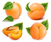 picture of apricot  - Apricots with green leaves and water drops - JPG