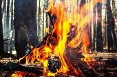 image of bonfire  - Bonfire in the fores - JPG