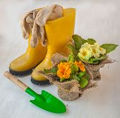 foto of cowslip  - Primula on a background of yellow boots - JPG