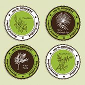 picture of saw-palmetto  - Set of Natural Organic Product badges - JPG