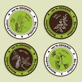 pic of bitter melon  - Set of Natural Organic Product badges - JPG