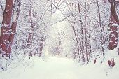 picture of snow forest  - Snow - JPG