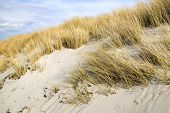 foto of dune grass  - Picture of golden dune grass in sand on the coast of the Baltic Sea - JPG