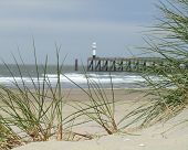 image of dune grass  - Marram Grass growing on a sand dune with a lighthouse at the entrance to Blankenberge harbour - JPG