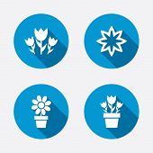 stock photo of flower pot  - Flowers icons - JPG