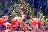 pic of pink flamingos  - Pink flamingo close - JPG