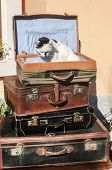 picture of old suitcase  - Old vintage retro used leather suitcases stacked and placed one on another and cat on top in house backyard - JPG