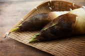 picture of bamboo  - Fresh harvested bamboo shoot or bamboo sprouts with outer husk still intact - JPG