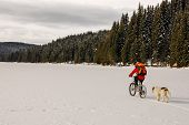 image of shepherds  - Mountain biker and shepherd dog on a frozen lake in pine forest. ** Note: Visible grain at 100%, best at smaller sizes - JPG