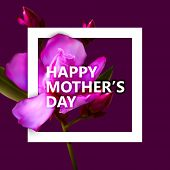 foto of oleander  - vector typographic illustration of Happy Mothers Day label with white square frame and oleander flowers - JPG