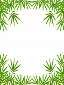 stock photo of bamboo leaves  - bamboo leaves isolated on white background clipping path included - JPG