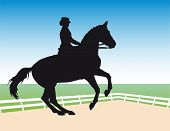 stock photo of horse riding  - equestrian sport  - JPG
