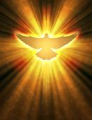 foto of pentecostal  - shining dove with rays on a dark golden background - JPG