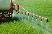 Tractor Spraying Herbicide Over Wheat Field With Sprayer. Agriculture, Farming, Gmo, Pollution, Cont poster