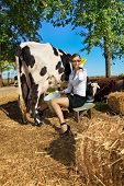 stock photo of milkmaid  - Business woman  milking cow on farm - JPG