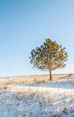 A Frozen Alone Tree On A Hill In Winter Season, Frozen Field With A Alone Tree On Hill poster