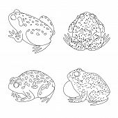 Vector Illustration Of Amphibian And Animal Logo. Collection Of Amphibian And Nature Stock Vector Il poster