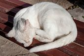 White Dirty Stray Street Mongrel Cat One-eyed Blind Slipping On The Bench On The Street. Abandoned S poster