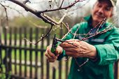 Man Pruning Tree With Clippers. Male Farmer Cuts Branches In Spring Garden With Pruning Shears Or Se poster