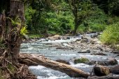 A Peaceful River In Papua New Guinea, Popular For Gold Mining, On The Island Of Bougainville, Papue  poster
