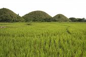pic of chocolate hills  - the seven sisters part of the chocolate hills of bohol rising up over rice paddies in the philippines