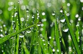 stock photo of spring-weather  - Dew drops close up - JPG