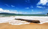 foto of driftwood  - Sea beach and dead driftwood tree trunk - JPG