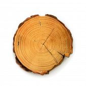 stock photo of cutting trees  - Tree stump - JPG