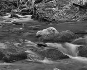 pic of brook trout  - A black and white image of a mountain trout stream in Southwestern Virginia - JPG