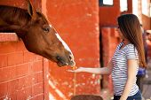pic of feeding horse  - Pretty Hispanic girl feeding her horse carrots in a stable - JPG
