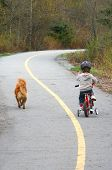pic of pooper  - Toddler and small dog share an unspoken bond as they ride along a bike path - JPG