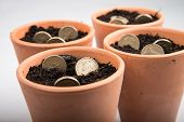 stock photo of british pound sterling note  - growing coins in ceramic pot on white background