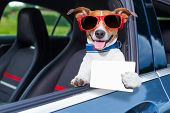 foto of car-window  - dog leaning out the car window showing a blank and empty drivers license - JPG