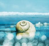 image of snail-shell  - A seascape featuring a moon snail shell with shallow depth of field - JPG