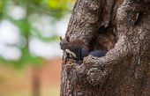 stock photo of wallpaper  - squirrel on a tree - JPG