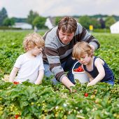 stock photo of pretty-boy  - Two little funny kid boys and their father on organic strawberry farm in summer picking and eating fresh ripe berries - JPG