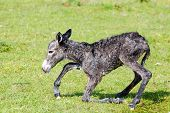 little donkey trying his first step